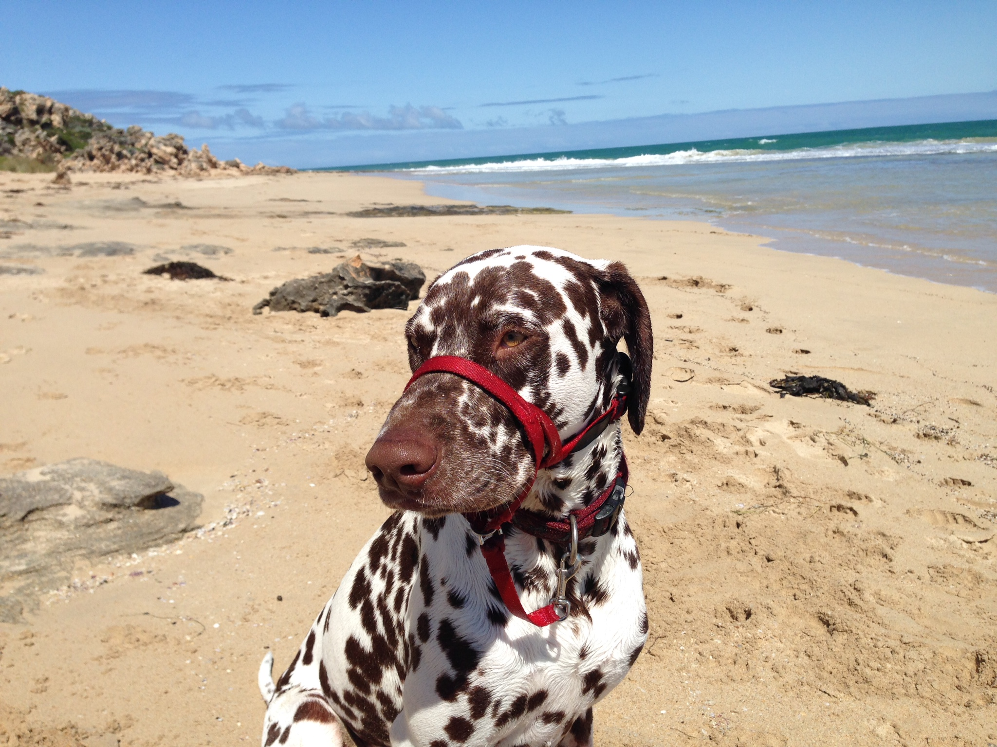 Charlie at the beach