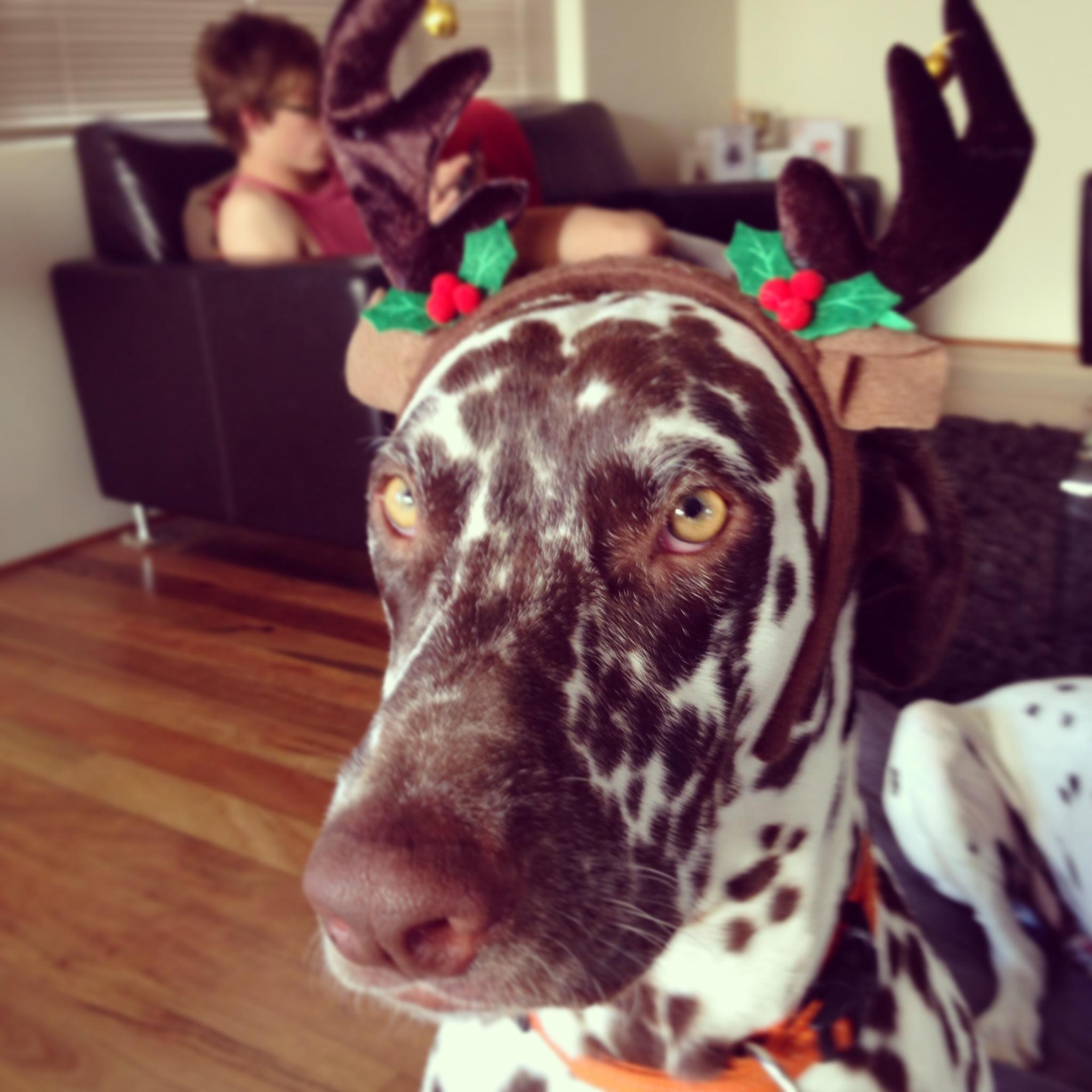 Reindeer Charlie